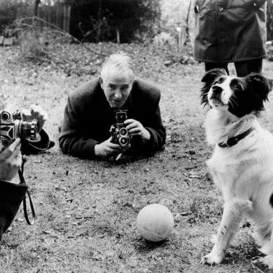 animali e sport